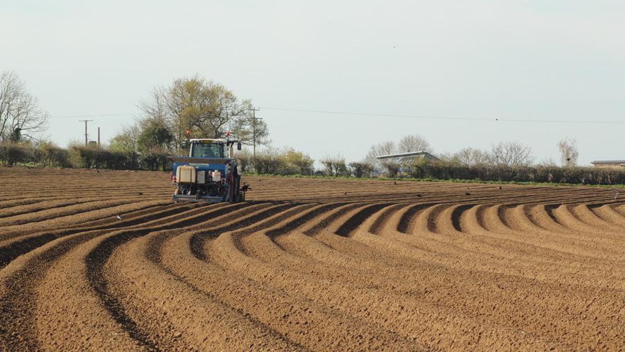Vaux & Sons potato planting-