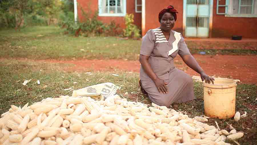 Bertha Otor, a Kenyan farmer who has planted Drought TEGO for two years with good results