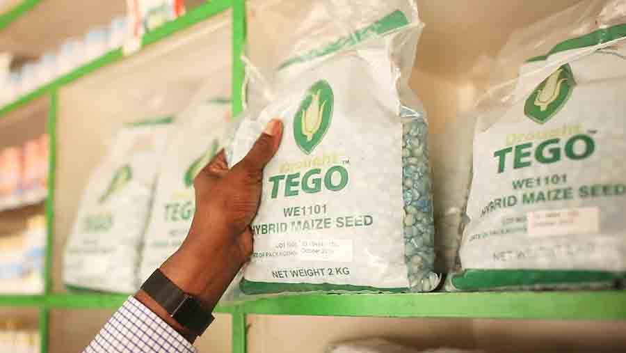 Drought TEGO maize seed is available from local seed shops so smallholder farmers can access modern, hybrid seed, specifically bred for local conditions