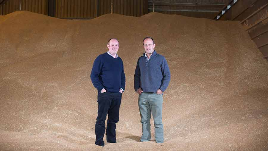 Ballaam brothers in grain store