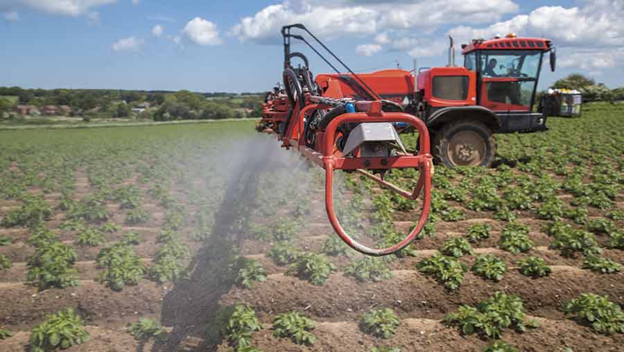 blight spraying potatoes