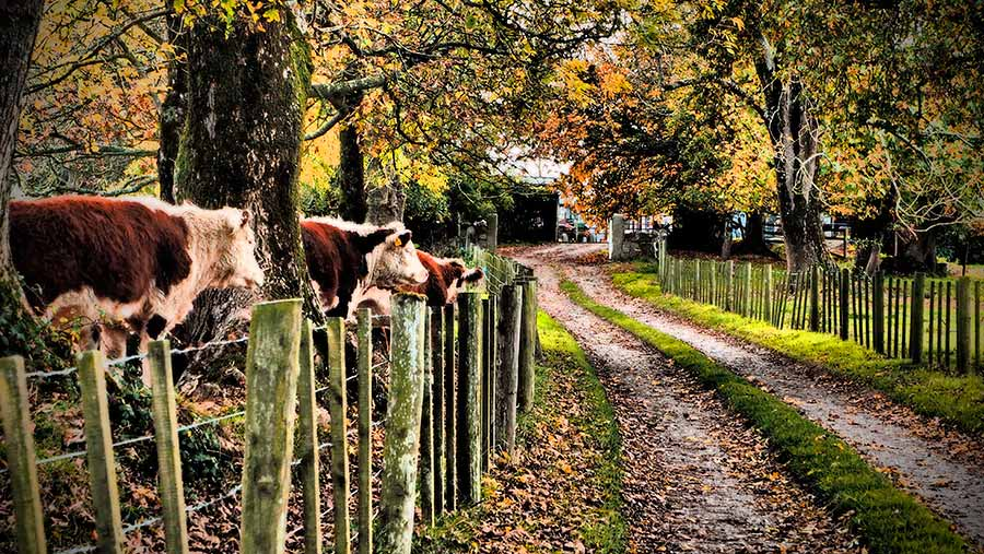 cattle-trees-main