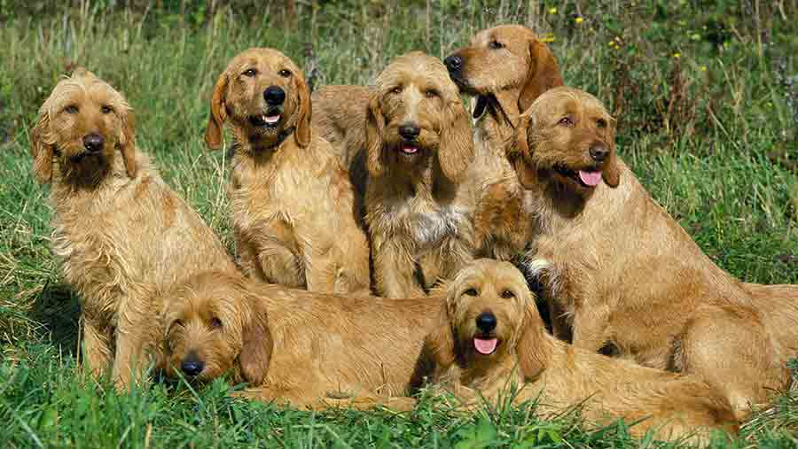 Group of dogs  © Gerard Lacz/REX/Shutterstock