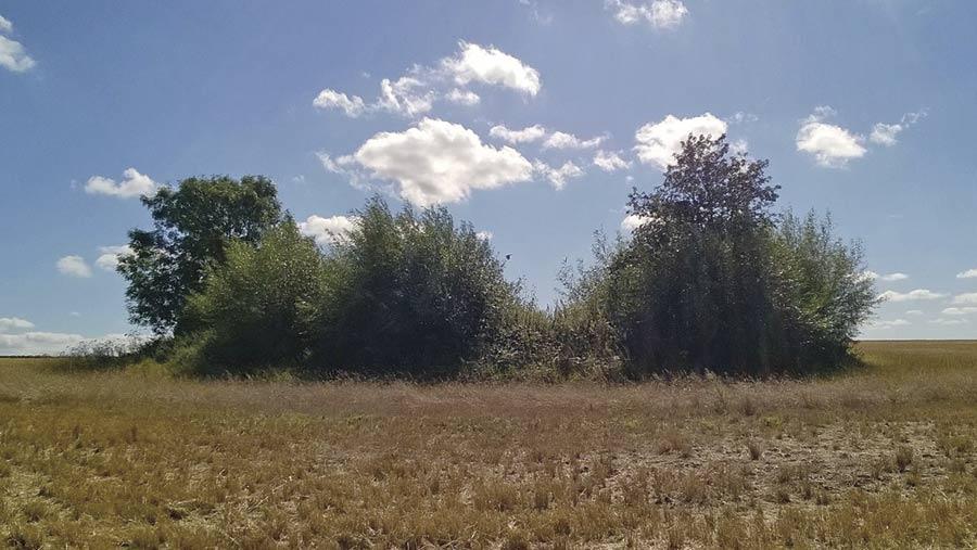 field pond buffering