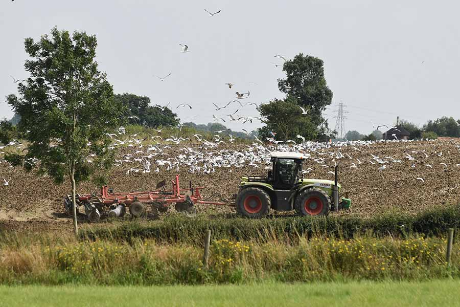 cultivating after oilseed rape in mid-Suffolk