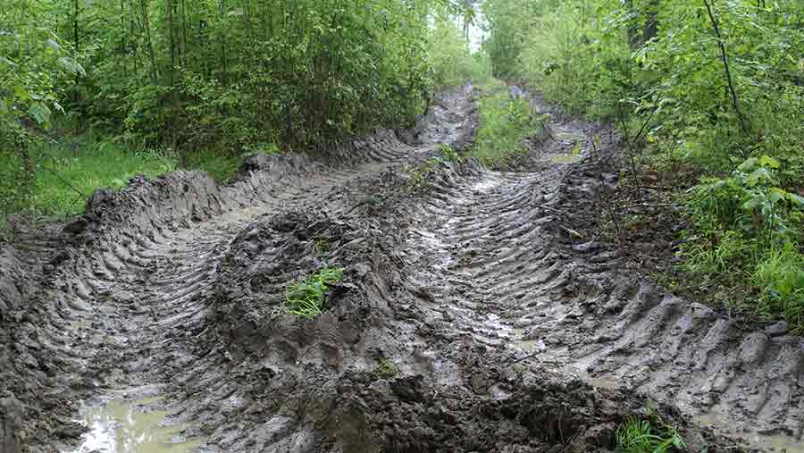 Muddy track © FLPA/David Warren/REX/Shutterstock