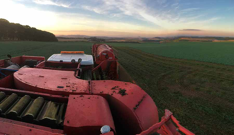 Coming to the end of the pea harvest in the Scottish Borders