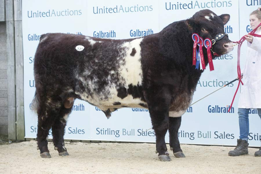 Senior Champion Willingham Kabatic from A Haigh, Market Rasen, went to I Evans, Aberystwyth, for 11,000gns. © Tim Scrivener