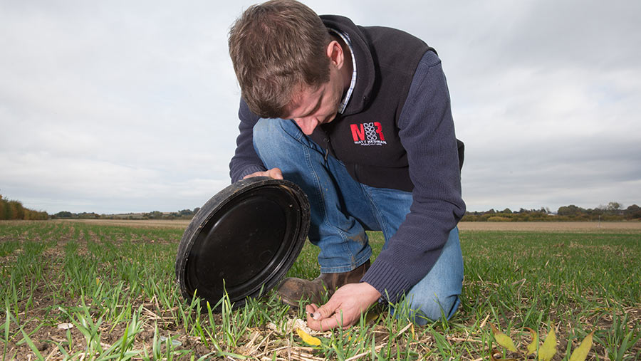 Checking for slugs under bait point