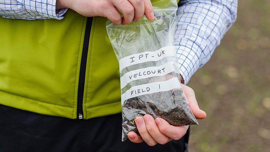 Checking soil sample