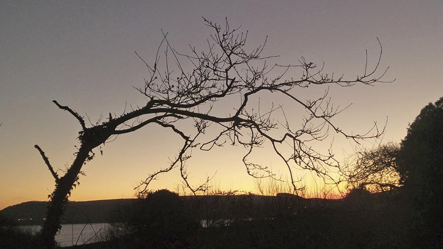 A tree silhouetted against a sunset