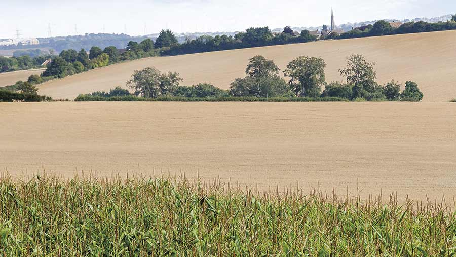 Fields of maize and wheat with hedges and a village in the distance