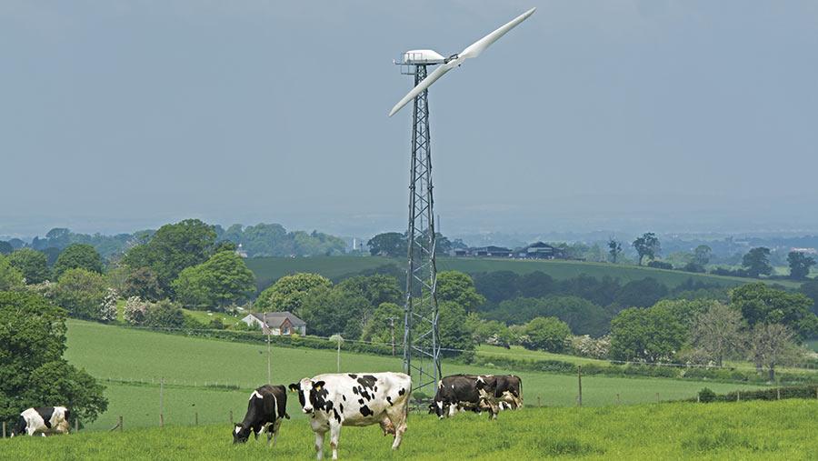 Wind turbine in a field with cattle