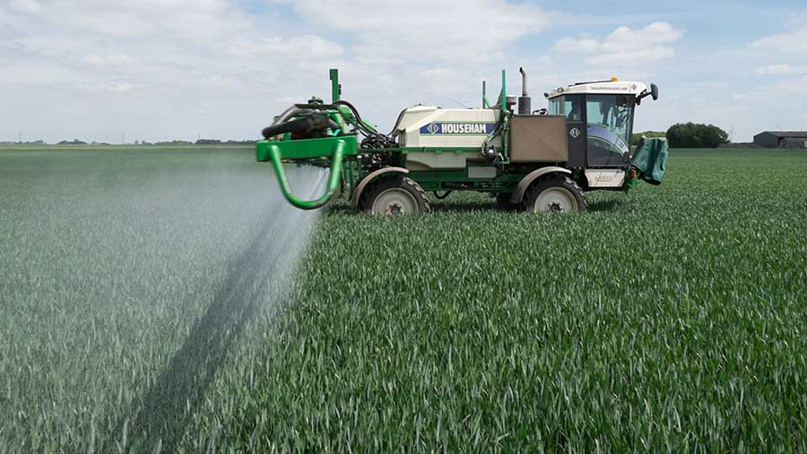 Spraying winter wheat at the flag leaf stage