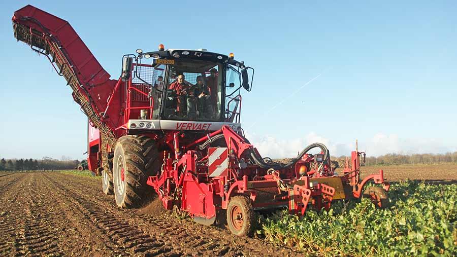 A Vervaet beet harvester works in a field of sugar beet