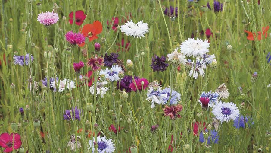 Flowers grow in a field