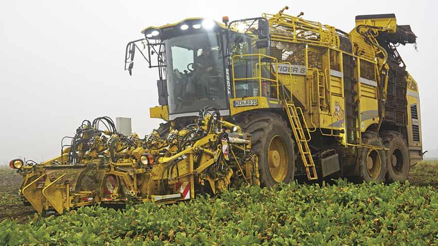 Tiger sugar beet loader