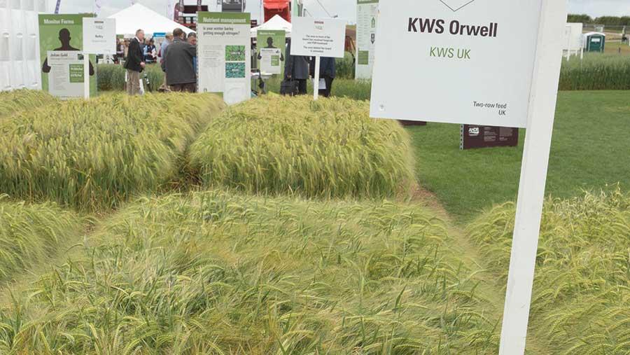winter barley, Orwell