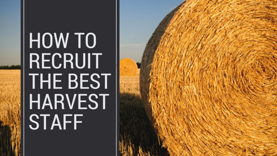 How to recruit the best harvest staff