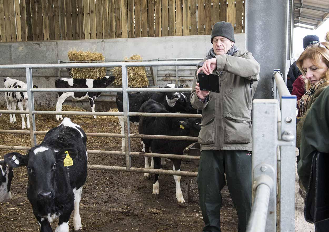 Rethinking-Cattle_8