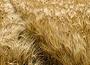 barley(1)