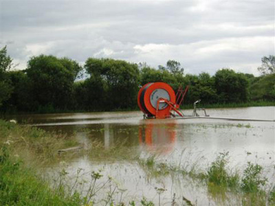 carrots in a flood