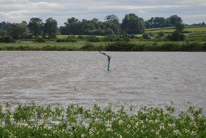 Flooded potato field_fwi