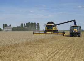Thorney farm - big