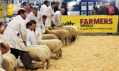 Smithfield-fair-sheep