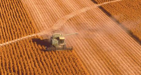 soya-harvest