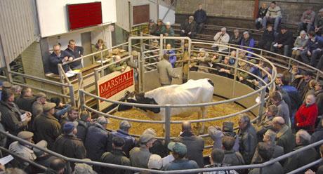 Chelford-dairy-choice1.jpg