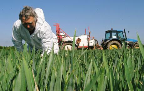 Wheat-spraying.jpg