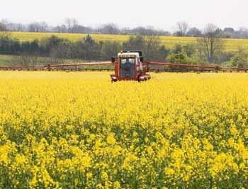 OSR crop plot