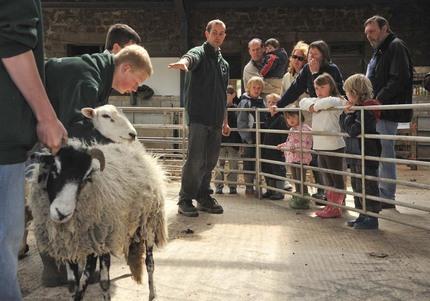 Open Farm Sunday 2009 2