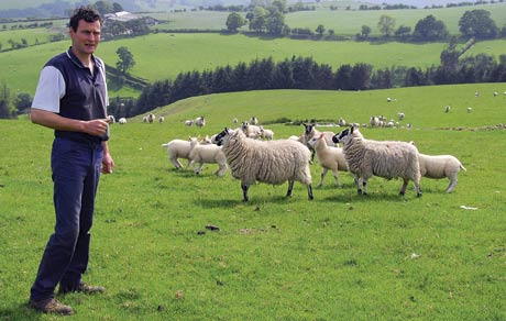 Aled&Sheep4