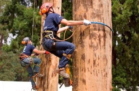 Royal Welsh pole climbing