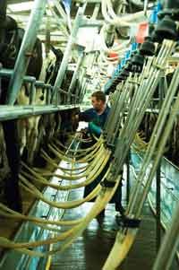 milking parlour