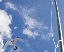 Allsop-Hawk-kite