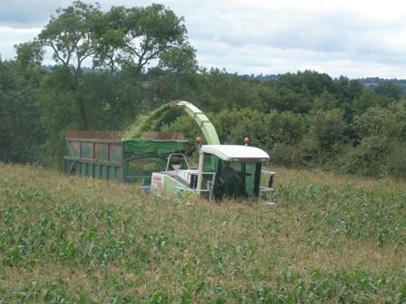 maize harvest UGC