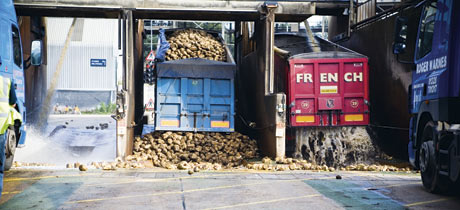 sugar beet factory