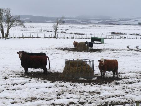 Snow in Scotland 1