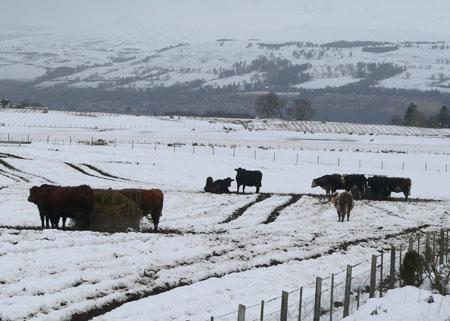 Snow in Scotland 2