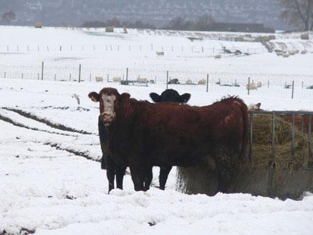 Snow in Scotland 3