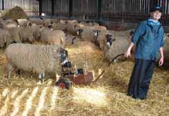 lamb trolley1