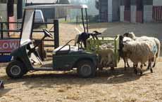 lamb trolley