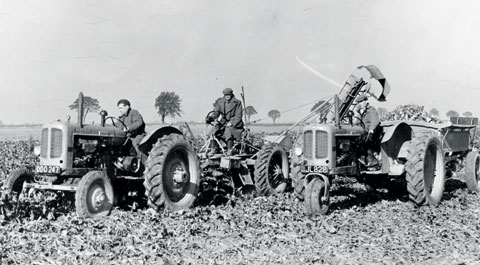 Early beet lifting