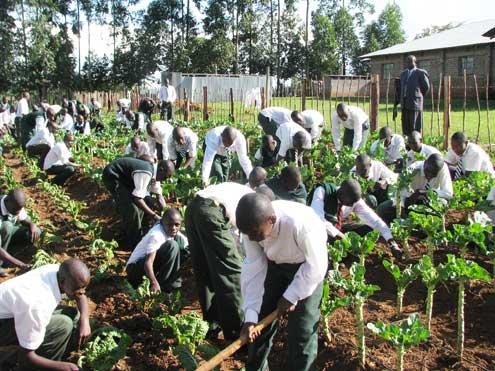 Secondary-school-vegetable-garden