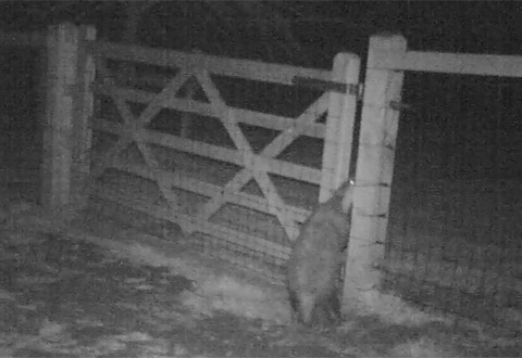 badger and gate