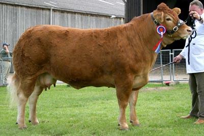 east of england beef champ 05