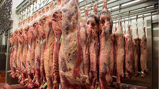 Beef-carcasses-©Rex